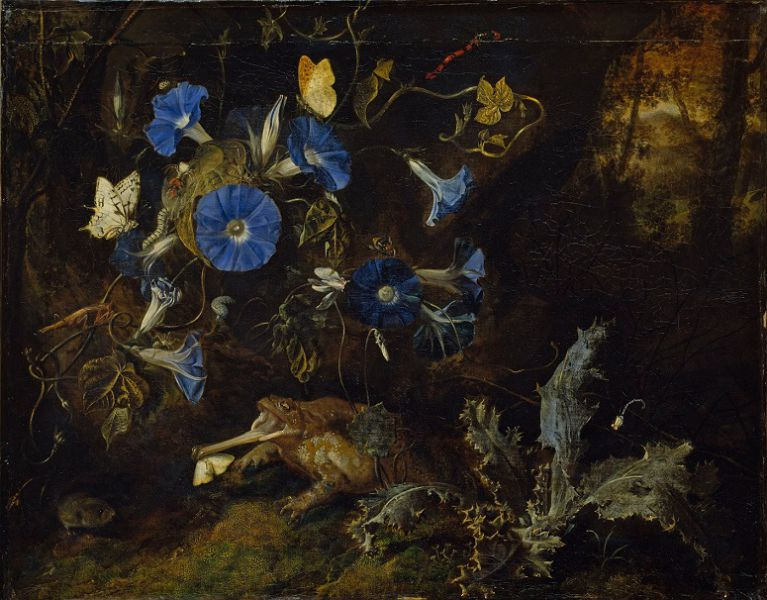 Otto Marseus van Schrieck, <i>Morning glory, toad and insects</i>, 1660